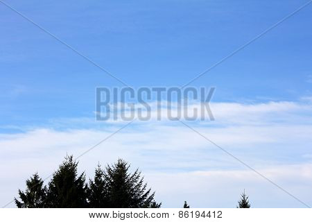 The Tops Of The Pine Trees And The Sky