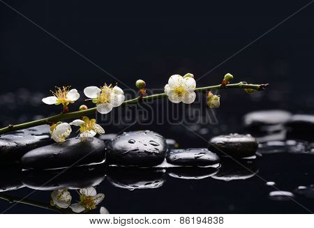still life with pebbles and with cherry blossom