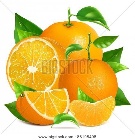 Fresh ripe oranges and tangerine with leaves. Vector illustration.