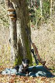 picture of hunt-shotgun  - lying hunting dog with a weapon - JPG