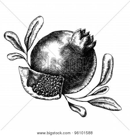 Hand drawn pomegranate illustration.
