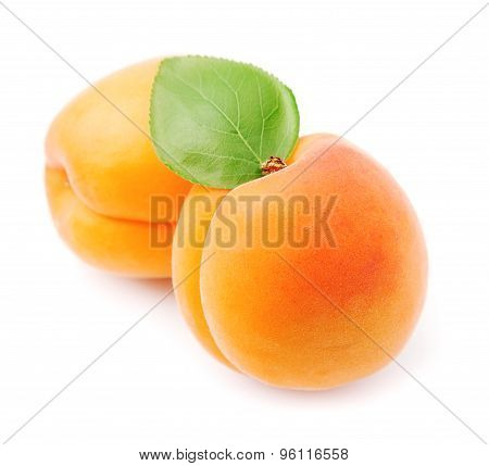 Sweet Apricots Fruits
