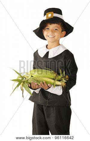 An adorable preschooler dressed as a Pilgrim happily carrying an armload of fresh corn.  On a white background.