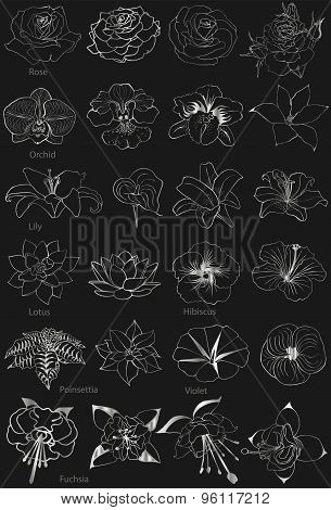 Flowers Collection. Silver silhouettes on a black background.