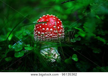 Toadstool in the dark forest with blurry background.