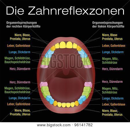 Teeth Reflexology Equivalent Organs German