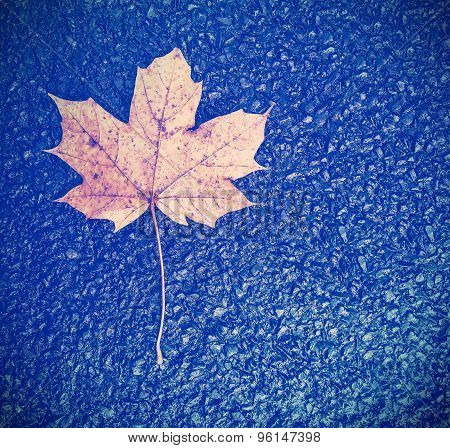 Vintage Instagram Style Autumn Leaf On Black Asphalt Background.