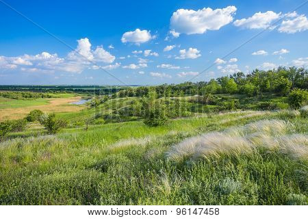 field of feather grass under the blue sky