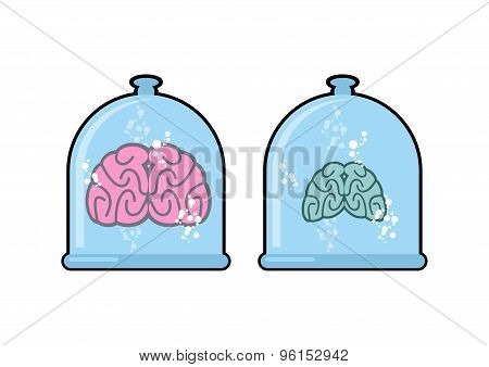 Human Brain In Laboratory Flask For Experiments. Human Body In A Closed Glass Dome. Two Brains: A No