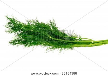 Bunch of dill -isolated on the white background.