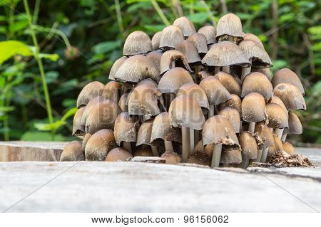 Small Mushrooms Of Different Colours On Mossy Tree Stump
