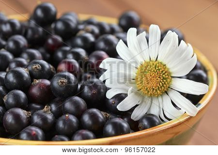 Black Currant And Camomile