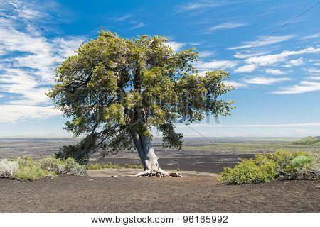 Mountain Top Tree 1