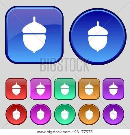 Acorn Icon Sign. A Set Of Twelve Vintage Buttons For Your Design. Vector