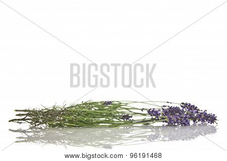 Lavender flowers on white.