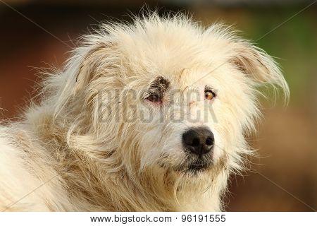 Portrait Of White Shepherd Dog