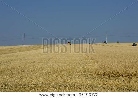 Harvesting Under The Beautiful Blue Sky
