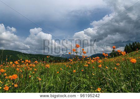 Orange Flowers Meadow Mountains