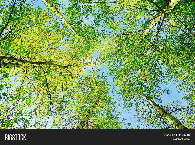 spring landscape green branches image u0026 photo bigstock