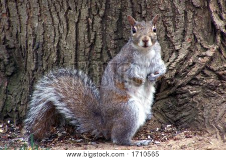 Startled Squirrel