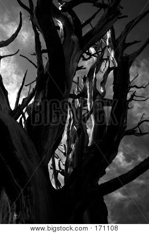 Scary Tree