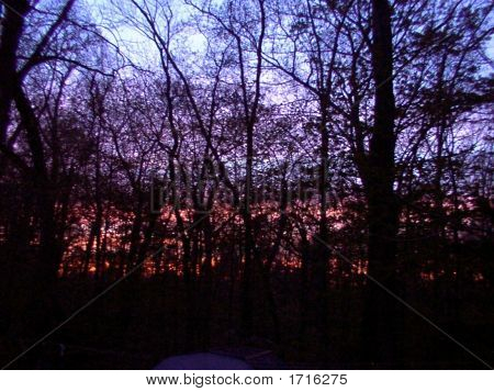 Pink Sunset Behind Inky Trees