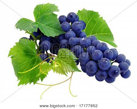 Fresh grape cluster with green leafs isolated with clipping path