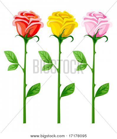 three vector rose flowers isolated on white background