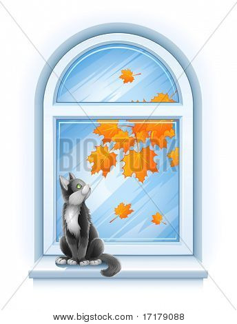 kitten sitting on windowsill of autumn window