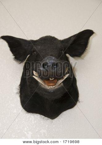 Pig Headnon The Wall