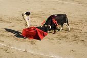 Corrida Bullfighting  In Spain