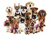Group of cute dogs on white background poster