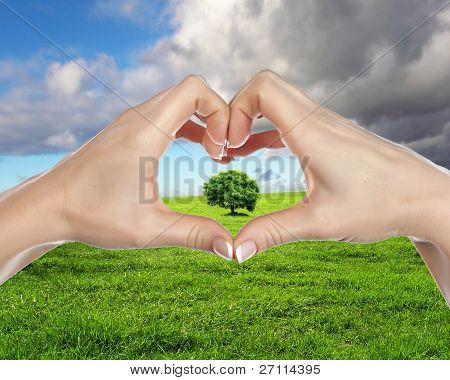 Human hands and green plant