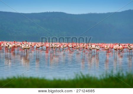 Flocks of flamingo. Africa. Kenya. Lake Nakuru