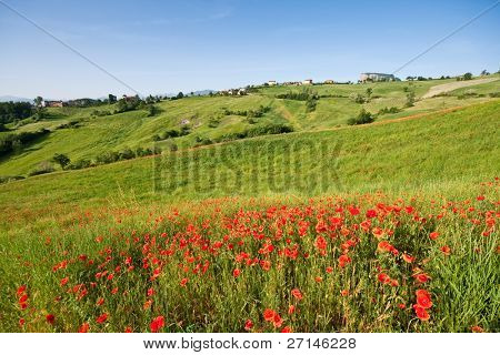 typical landscape in Italian region Tuscany