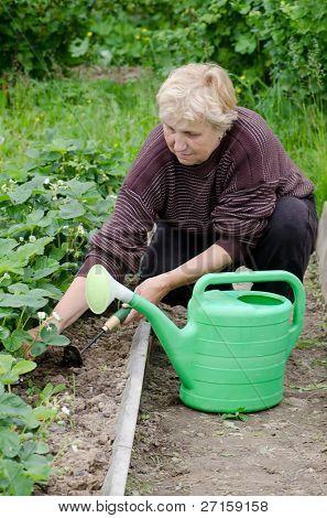 The elderly woman works on kitchen garden