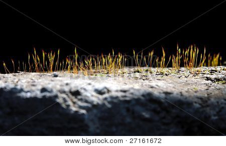 Grass growing from crack in old asphalt pavement