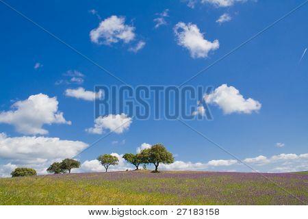 Spring landscape in Alentejo, Portugal.
