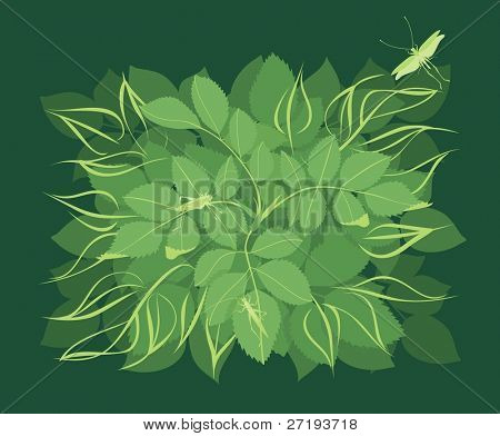 foliage background with grasshoppers