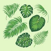 Tropical Leaves Vector Illustration. Set Isolated Palm Exotic Leaf Plant Floral Botany Decoration Bo poster