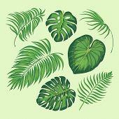 Tropical Leaves Vector Illustration. Set Isolated Palm Exotic Leaf Plant Floral Botany Decoration Bo poster