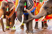 Beautiful And Large Elephants Has Playing On Ground, Elephant Relationship, Colorful Painted Elephan poster