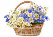stock photo of flower arrangement  - Beautiful flowers in basket isolated on white - JPG