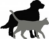 Vector illustration: dog and cat  on white background