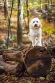 Happy Dog Standing On Fallen Tree Trunk In Woods poster