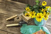 Gardening. Hobby. Planting And Replanting Plants. A Bouquet Of Yellow Bright Garden Flowers In A Ste poster