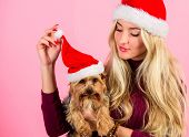 Woman And Yorkshire Terrier Wear Santa Hat. Girl Attractive Blonde Hold Dog Pet Pink Background. Cel poster