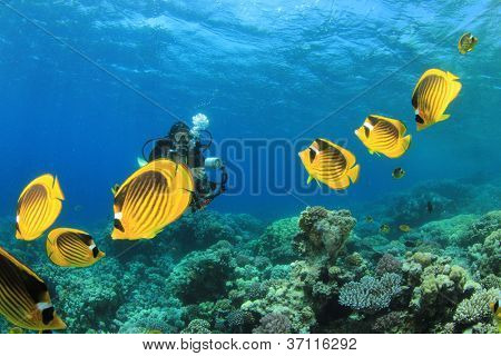 Female Scuba Diver and School of Tropical Fish on Red Sea coral reef