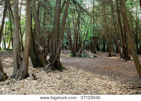 Bush Floor