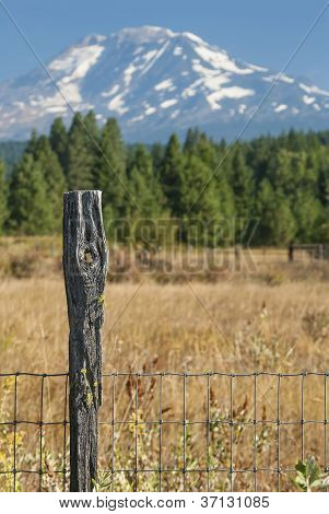 Fence Post With Knot Hole